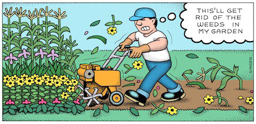 A guy rototills his garden to eliminate weeds